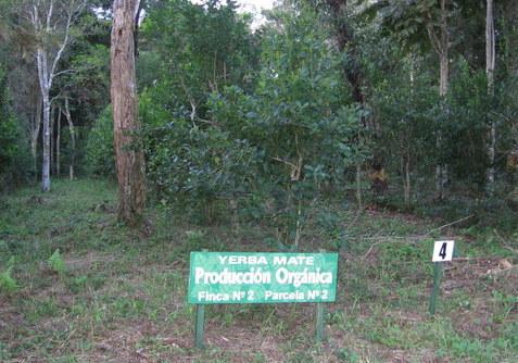 plantacja organiczna 4.jpg